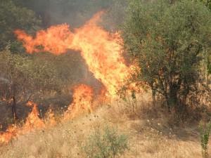 incendio-300x225 Brucia il parco nazionale del Pollino. Fronte del fuoco di un km