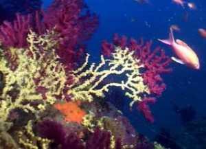 verde_calabria_mare-300x217 Numero verde per segnalare illeciti e abusi nel mare calabrese