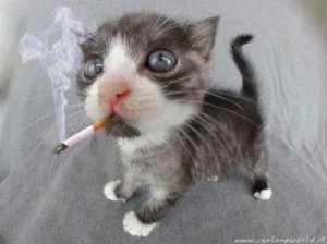gatto-sigaretta-300x224 Nonostante i ricorsi già inoltrati Equitalia continua a inviare i solleciti di pagamento!