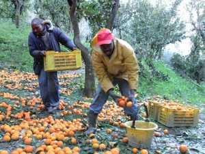 immigrati-arance-300x225 Reggio Calabria: tendopoli per immigrati