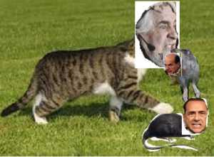 grillo-gatto
