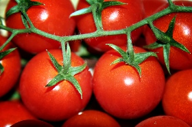 pomodoro-calabria