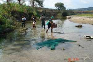DSC07450-300x200 Moria di pesci a Frassia