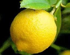 limone Presto il limone di Rocca imperiale marchio Igp