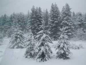 neve-300x225 Neve in Sila e nell'Aspromonte