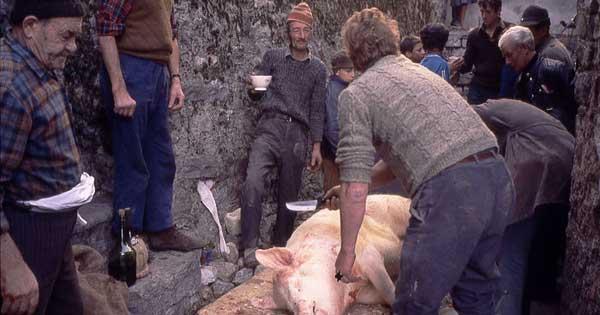 uccisione_maiale La tradizione del maiale a Bisignano