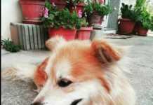 cane bianco marrone